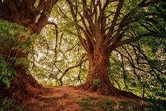 tree-3369950_1920